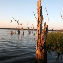 A Dead Tree in the Water