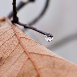 A Single Droplet