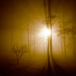 Fog by Night