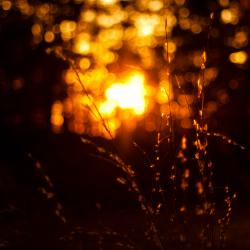 Bokeh at Sunset